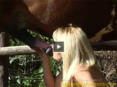 Blowing horse cock Video